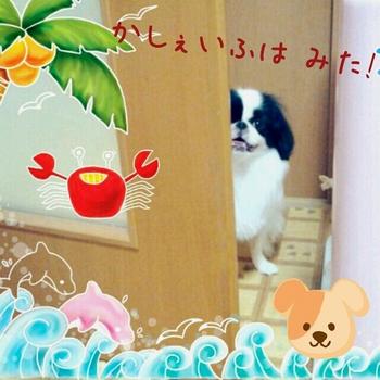 IMG_20140724201236[1].jpg